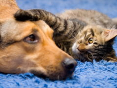 Climate change caused dogs to become more cat-like