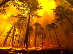 More than 4400 species globally threatened by changes in wildfire patterns